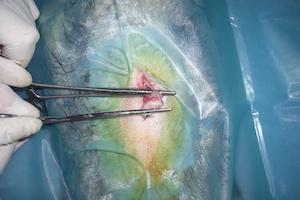 """Read more about the article Ovariectomie ou ovario-hystérectomie : un choix clair """"à raisonner"""""""
